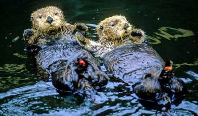 exxon valdez-oil-spill-on-sea-otters-2-700464
